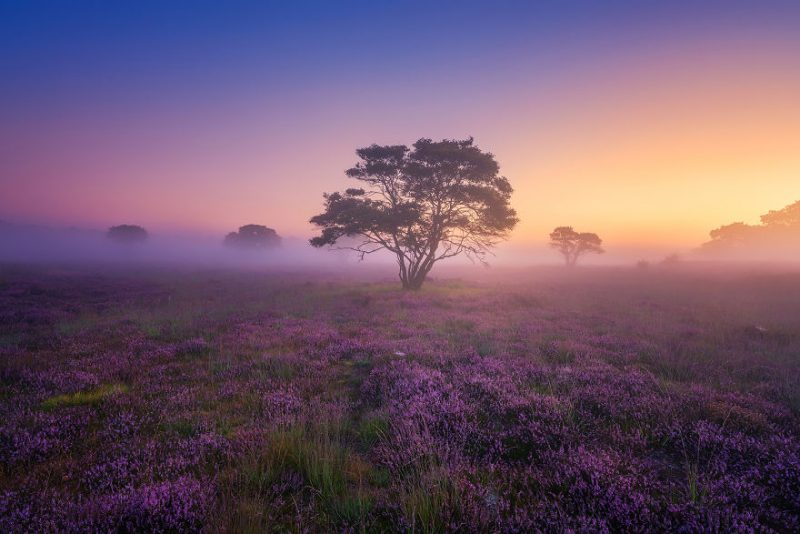 mystery-morning-beautiful-netherlands-landcapes-pictures