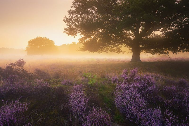 trees-of-silence-beautiful-netherlands-landcapes-pictures