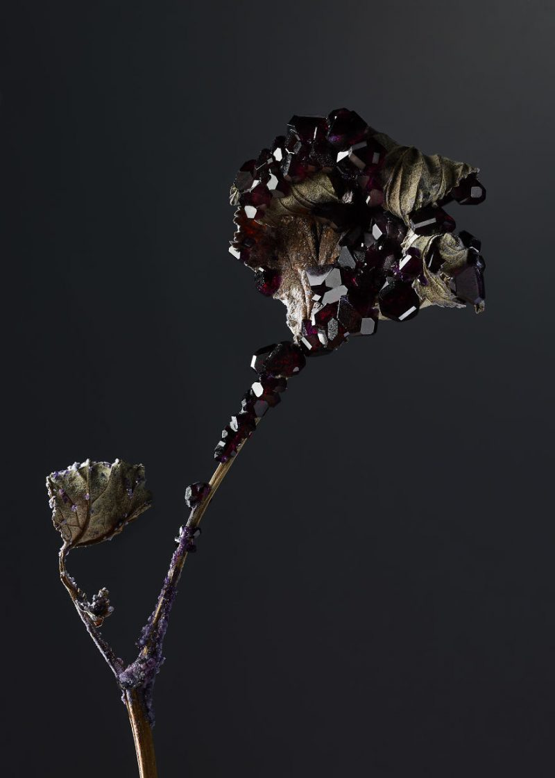 artwork-Encrusting-flowers-with-stabilised-crystals-photo-shoot (3)