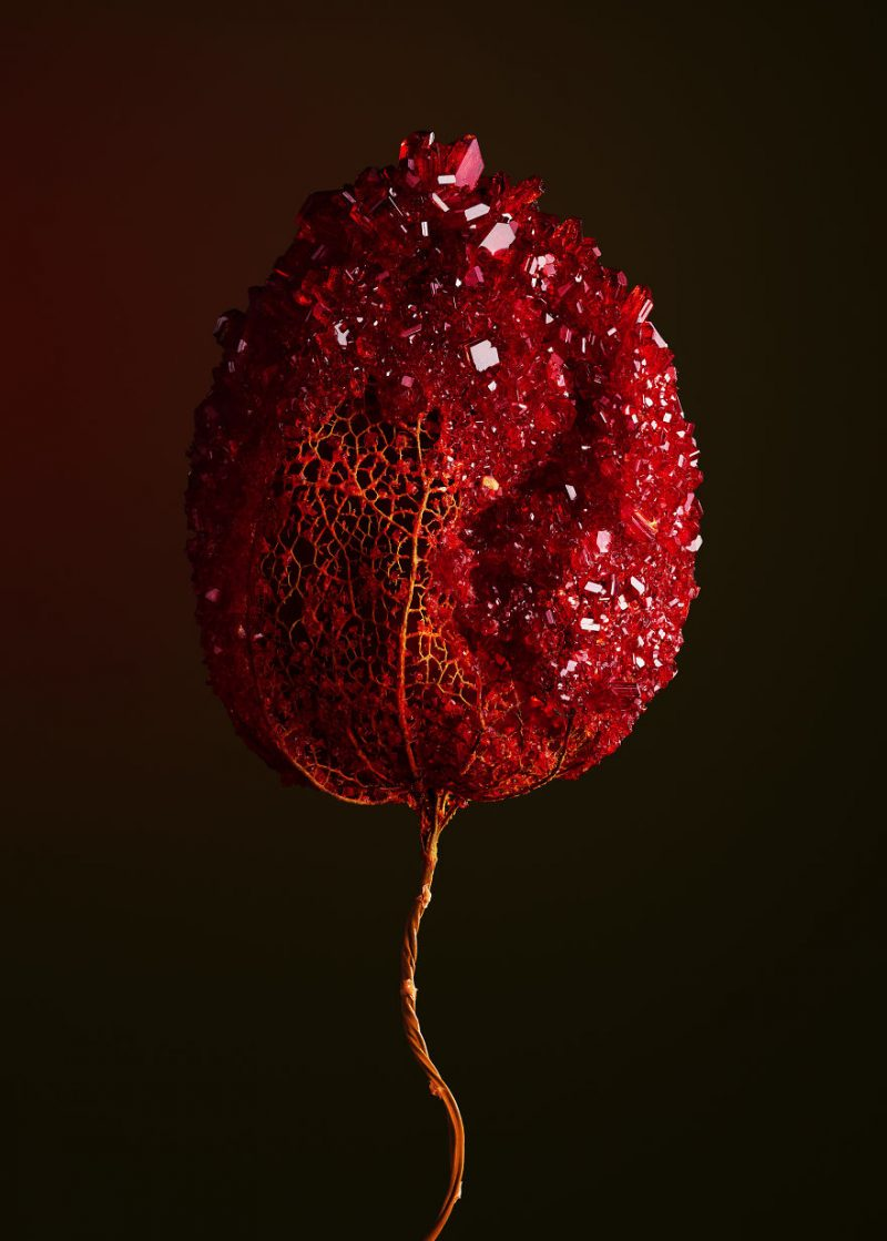 artwork-Encrusting-flowers-with-stabilised-crystals-photo-shoot (4)