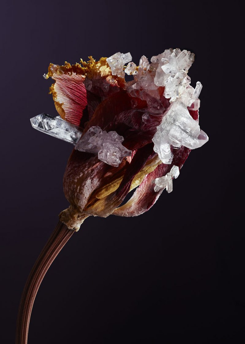 artwork-Encrusting-flowers-with-stabilised-crystals-photo-shoot (5)