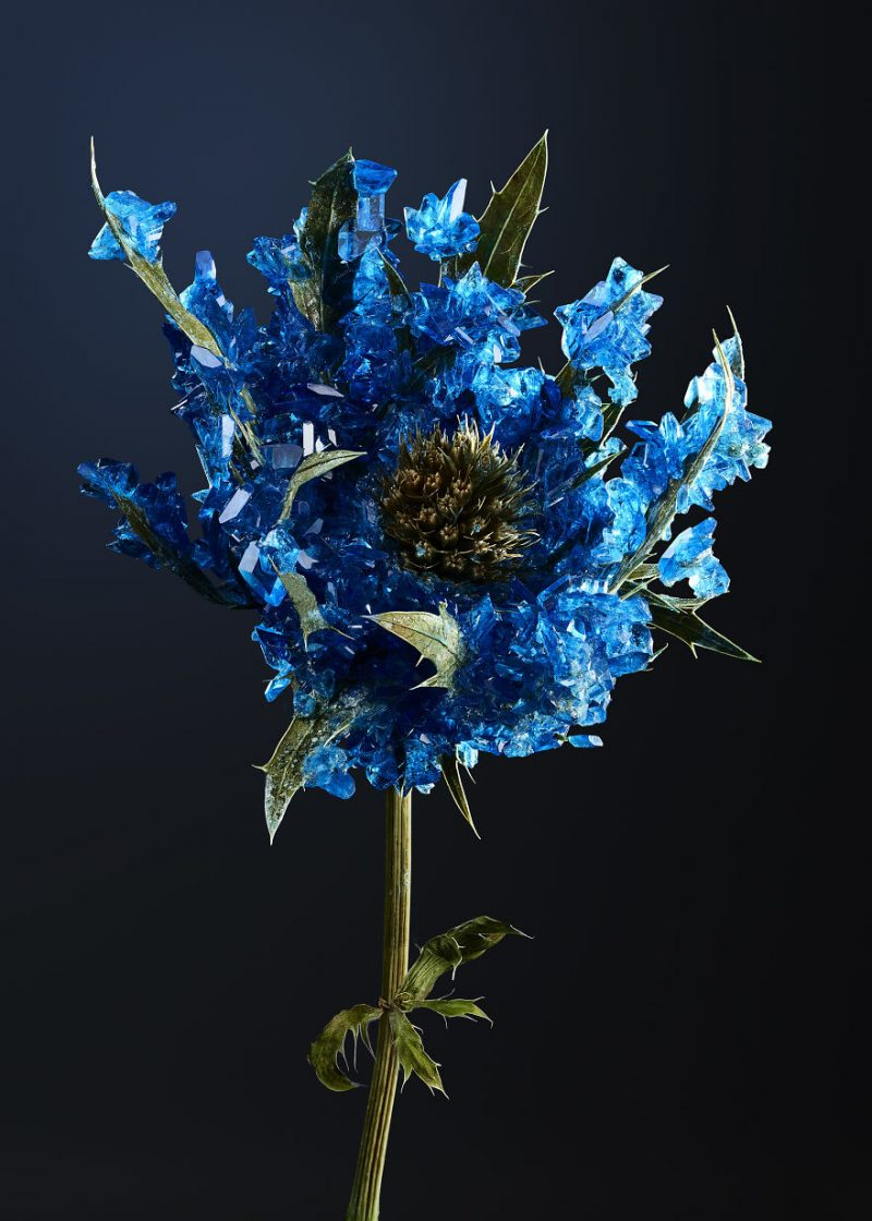 artwork-Encrusting-flowers-with-stabilised-crystals-photo-shoot (7)