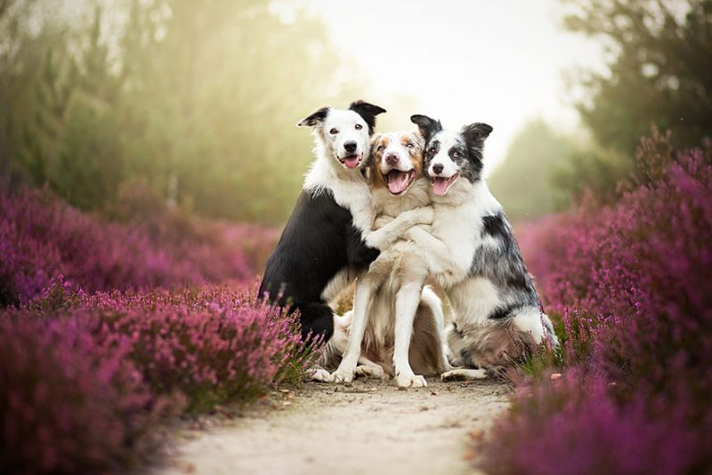 beautiful-dog-photography-1