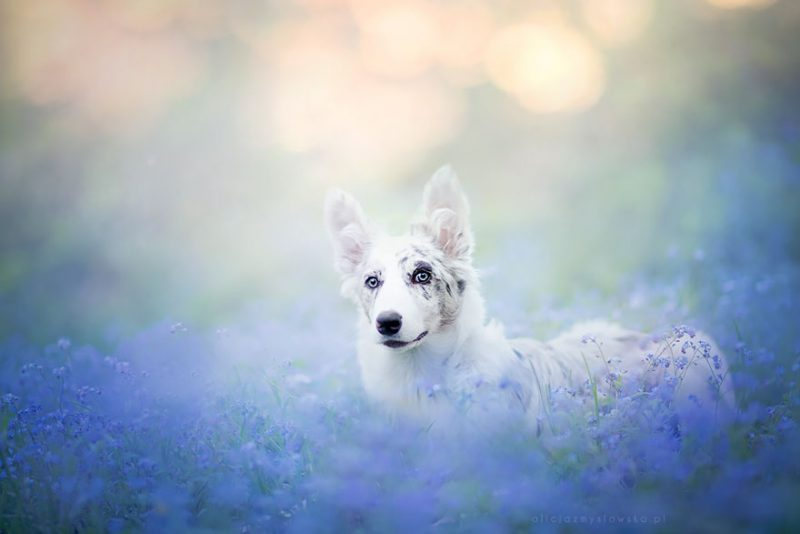 beautiful-dog-photography-10