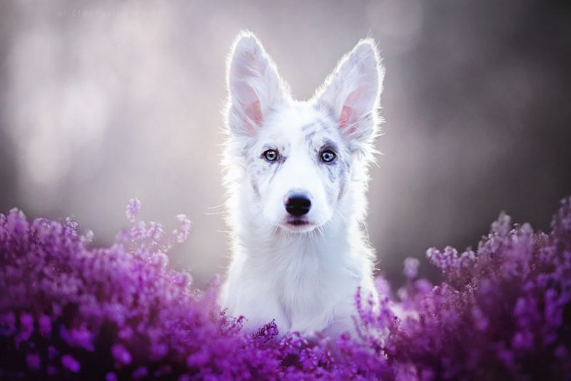 beautiful-dog-photography-11