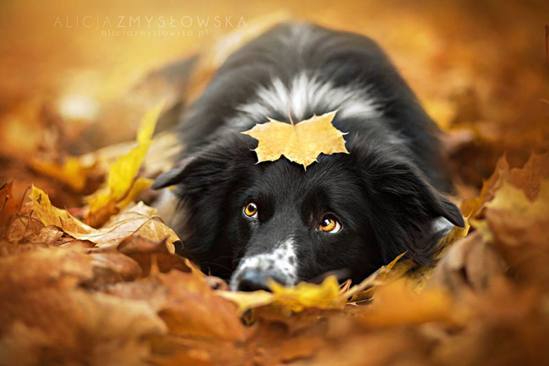 beautiful-dog-photography-2