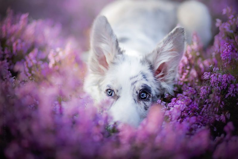 beautiful-dog-photography-7