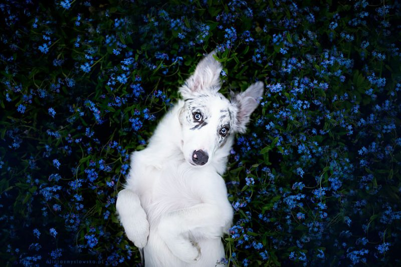 beautiful-dog-photography-9
