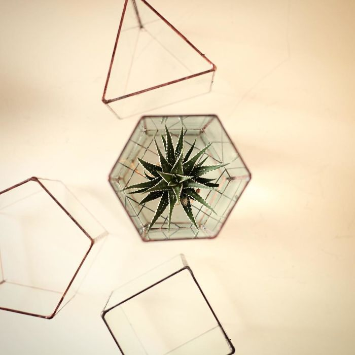 glass-terrarium-sculpture-design-13