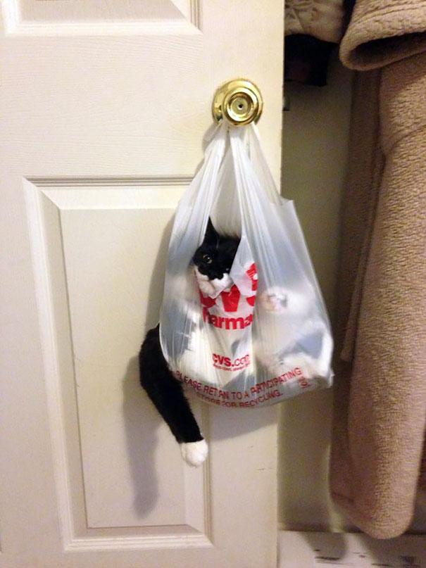hilarious-funny-cat-fails-pictures-1