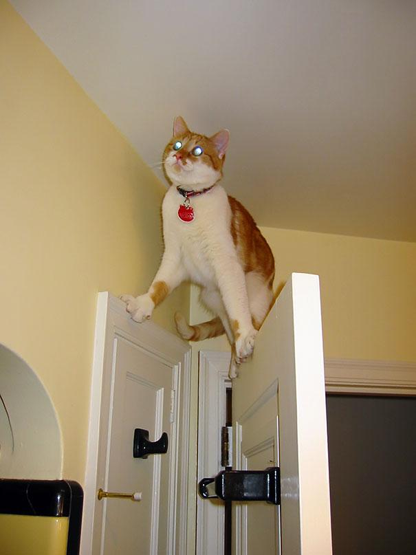 hilarious-funny-cat-fails-pictures-10