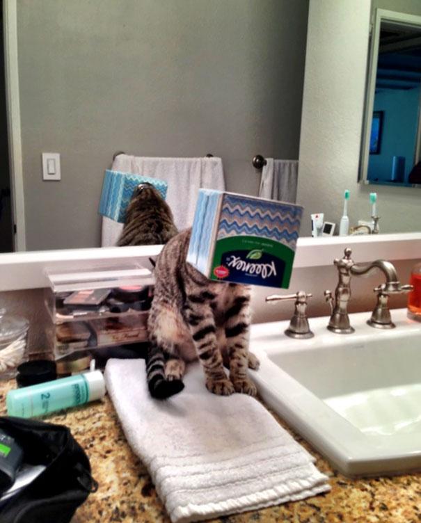 hilarious-funny-cat-fails-pictures-12