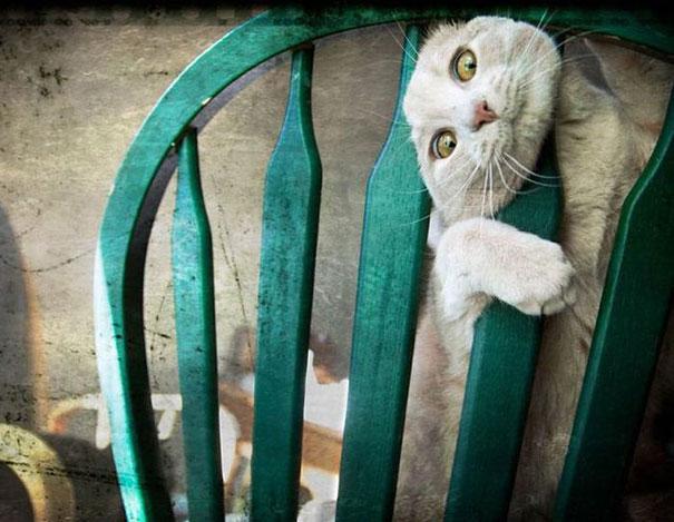 hilarious-funny-cat-fails-pictures-13