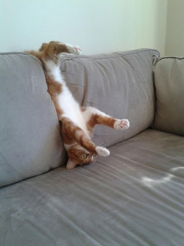 hilarious-funny-cat-fails-pictures-15
