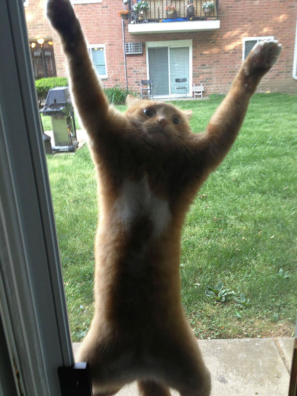 hilarious-funny-cat-fails-pictures-17