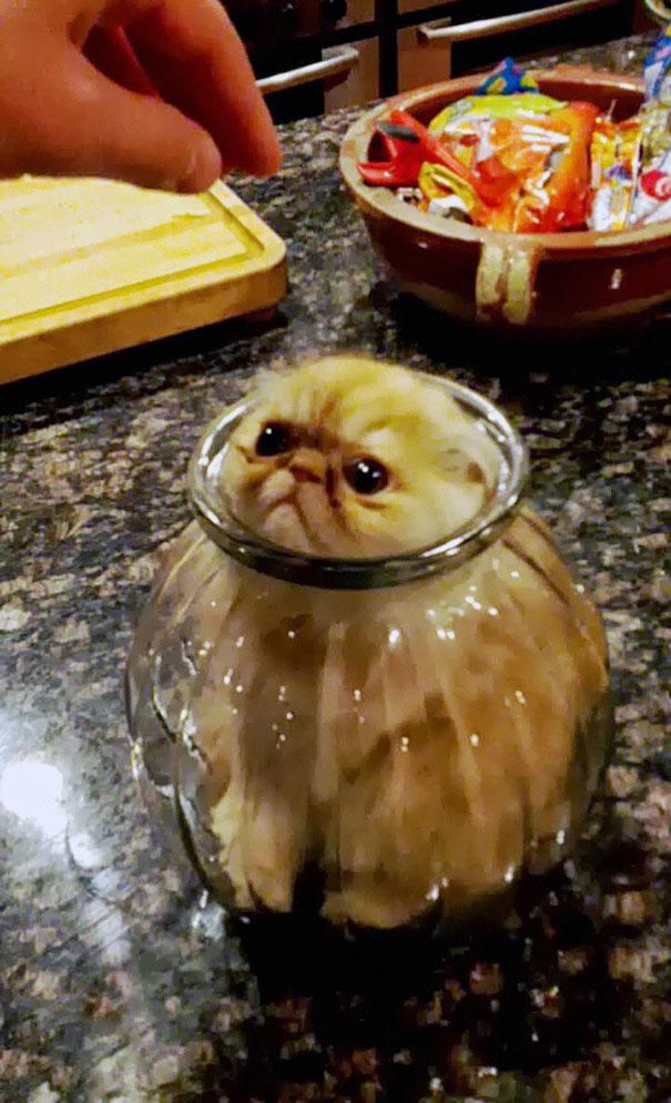hilarious-funny-cat-fails-pictures-18