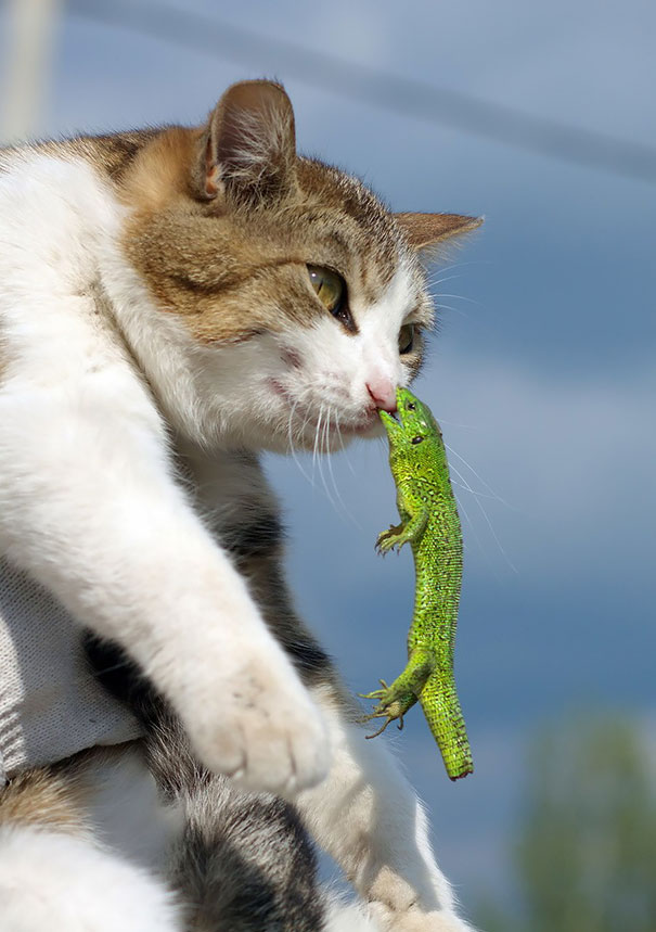 hilarious-funny-cat-fails-pictures-19
