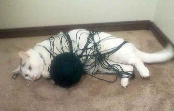 hilarious-funny-cat-fails-pictures-20