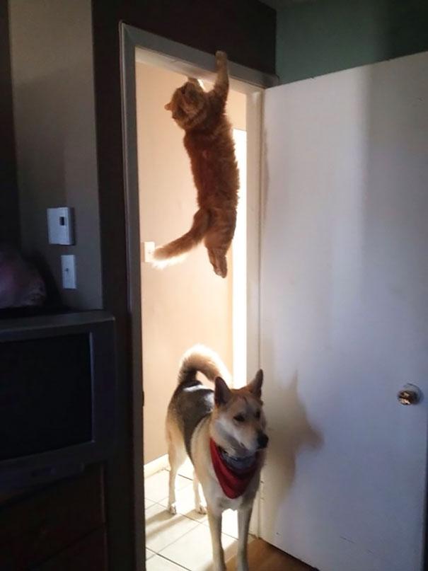 hilarious-funny-cat-fails-pictures-21