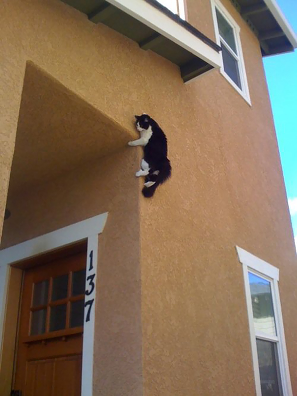 hilarious-funny-cat-fails-pictures-22