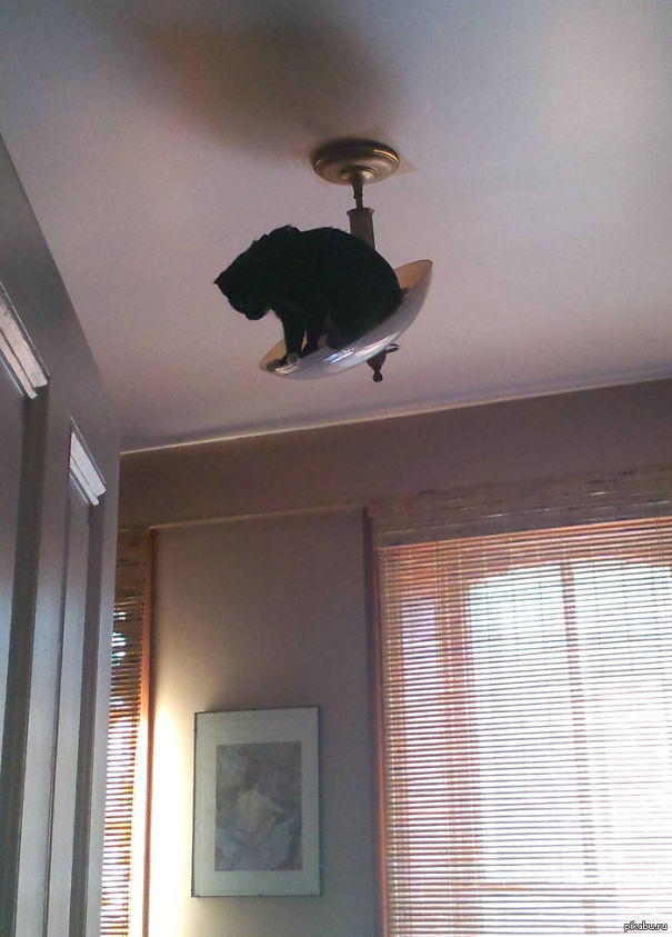 hilarious-funny-cat-fails-pictures-23