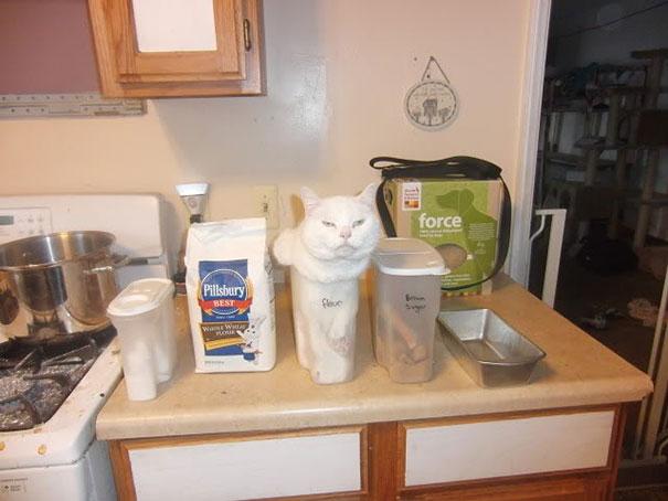hilarious-funny-cat-fails-pictures-24