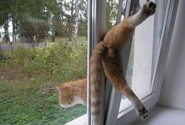 hilarious-funny-cat-fails-pictures-25