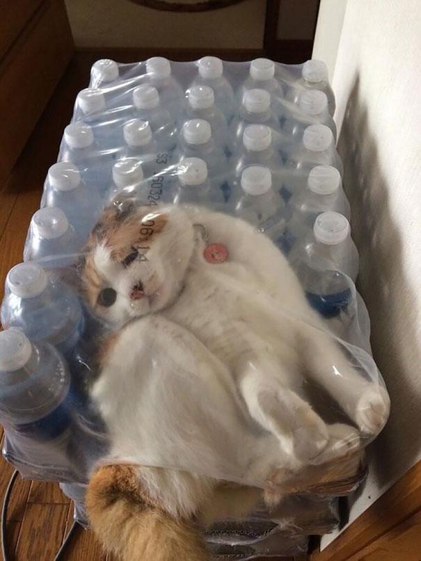 hilarious-funny-cat-fails-pictures-26