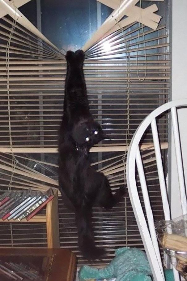 hilarious-funny-cat-fails-pictures-29