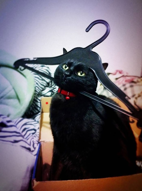 hilarious-funny-cat-fails-pictures-30