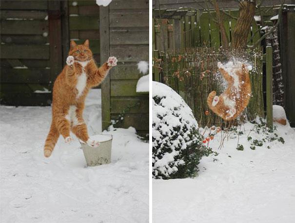 hilarious-funny-cat-fails-pictures-32
