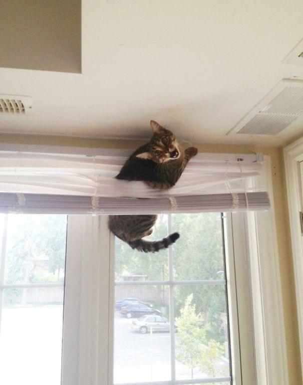 hilarious-funny-cat-fails-pictures-33