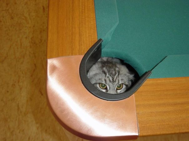 hilarious-funny-cat-fails-pictures-36