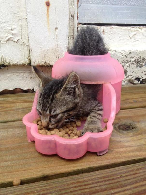 hilarious-funny-cat-fails-pictures-37