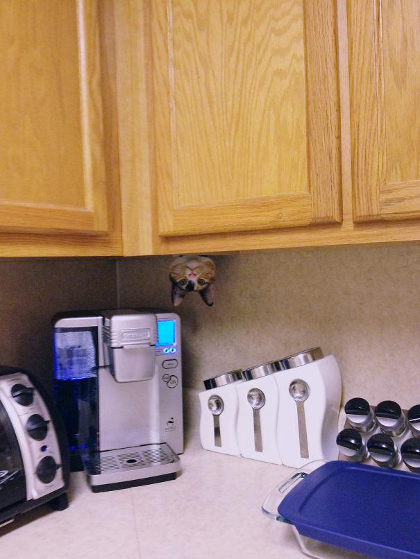 hilarious-funny-cat-fails-pictures-38