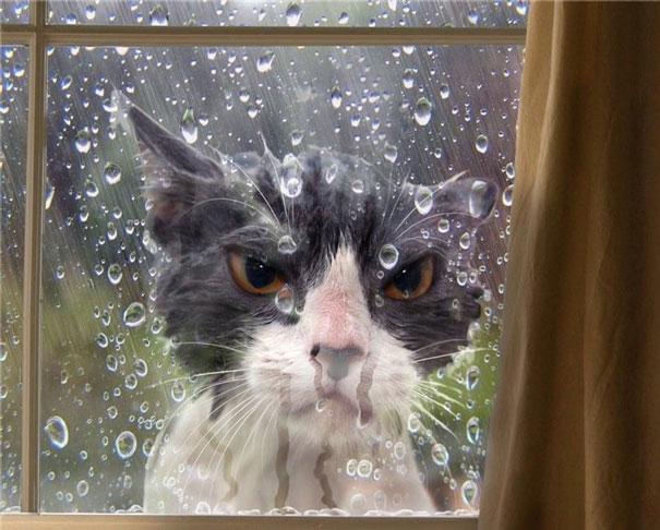 hilarious-funny-cat-fails-pictures-39
