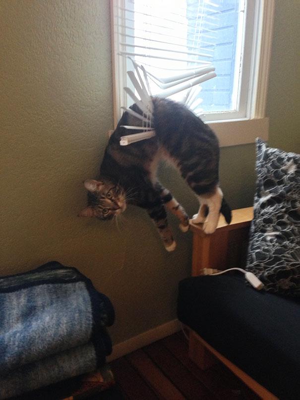 hilarious-funny-cat-fails-pictures-4