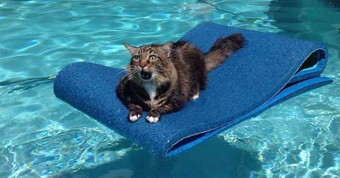 hilarious-funny-cat-fails-pictures-40