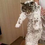 Hilarious photos of cats in predicament