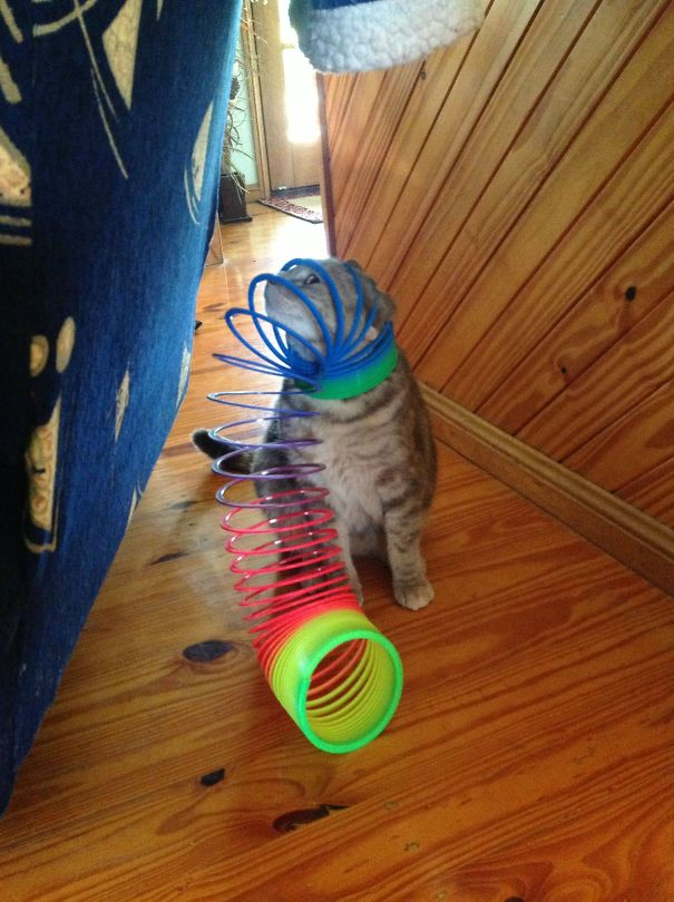 hilarious-funny-cat-fails-pictures-6