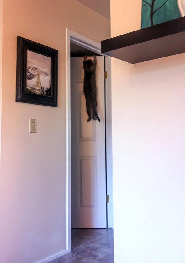 hilarious-funny-cat-fails-pictures-8