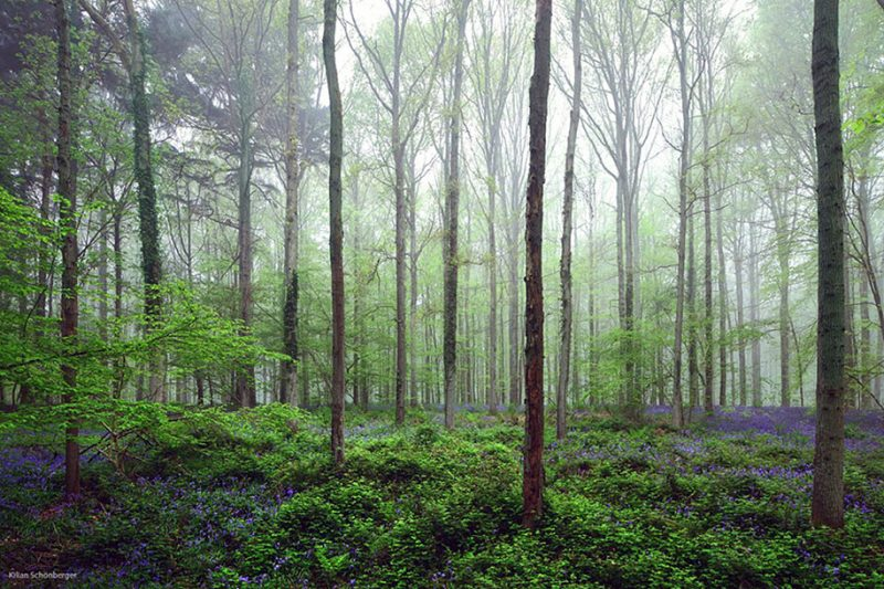 nature-photography-bluebell-forest-hallerbos-belgium-photos-11