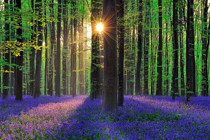 nature-photography-bluebell-forest-hallerbos-belgium-photos-2