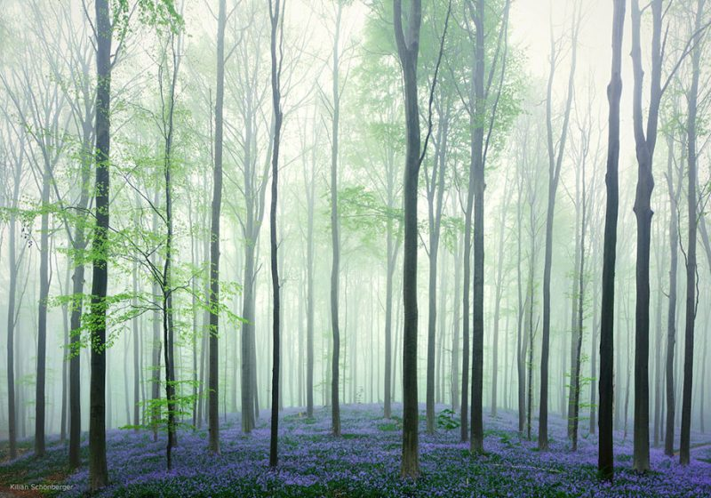 nature-photography-bluebell-forest-hallerbos-belgium-photos-5