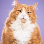 Photo series of cute fat cats