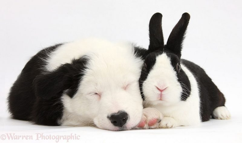 adorable-animal-pet-twins-matching-photos-12