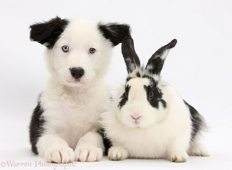 adorable-animal-pet-twins-matching-photos-13