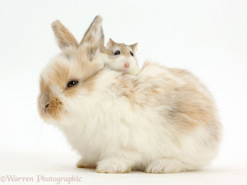 adorable-animal-pet-twins-matching-photos-15