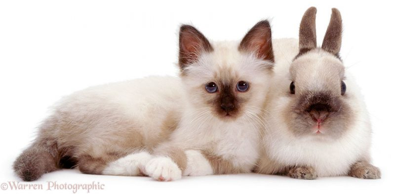 adorable-animal-pet-twins-matching-photos-3