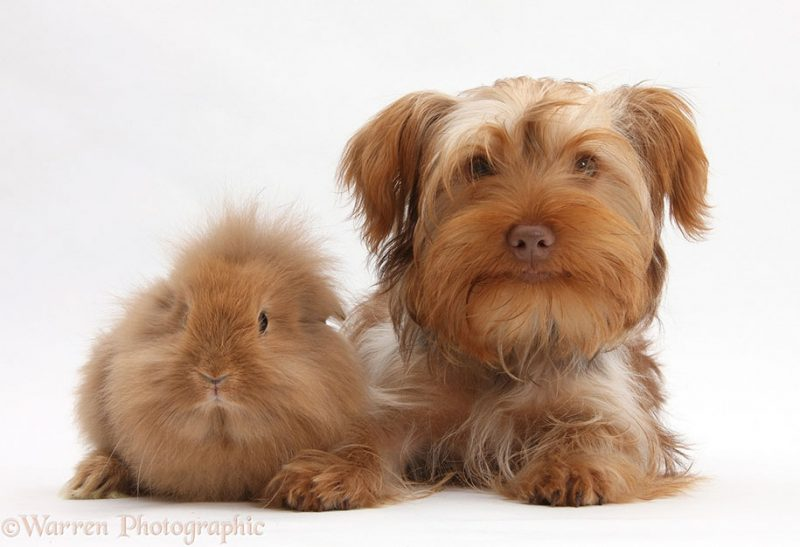 adorable-animal-pet-twins-matching-photos-4
